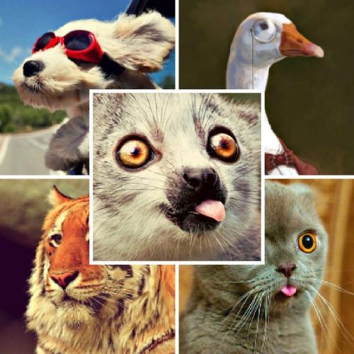 Подборка аватаров с животными #1